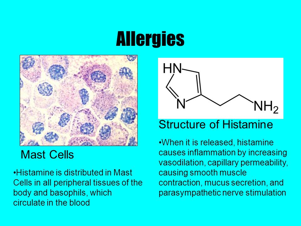 Allergies Structure of Histamine Mast Cells When it is released, histamine causes inflammation by increasing vasodilation, capillary permeability, causing smooth muscle contraction, mucus secretion, and parasympathetic nerve stimulation Histamine is distributed in Mast Cells in all peripheral tissues of the body and basophils, which circulate in the blood