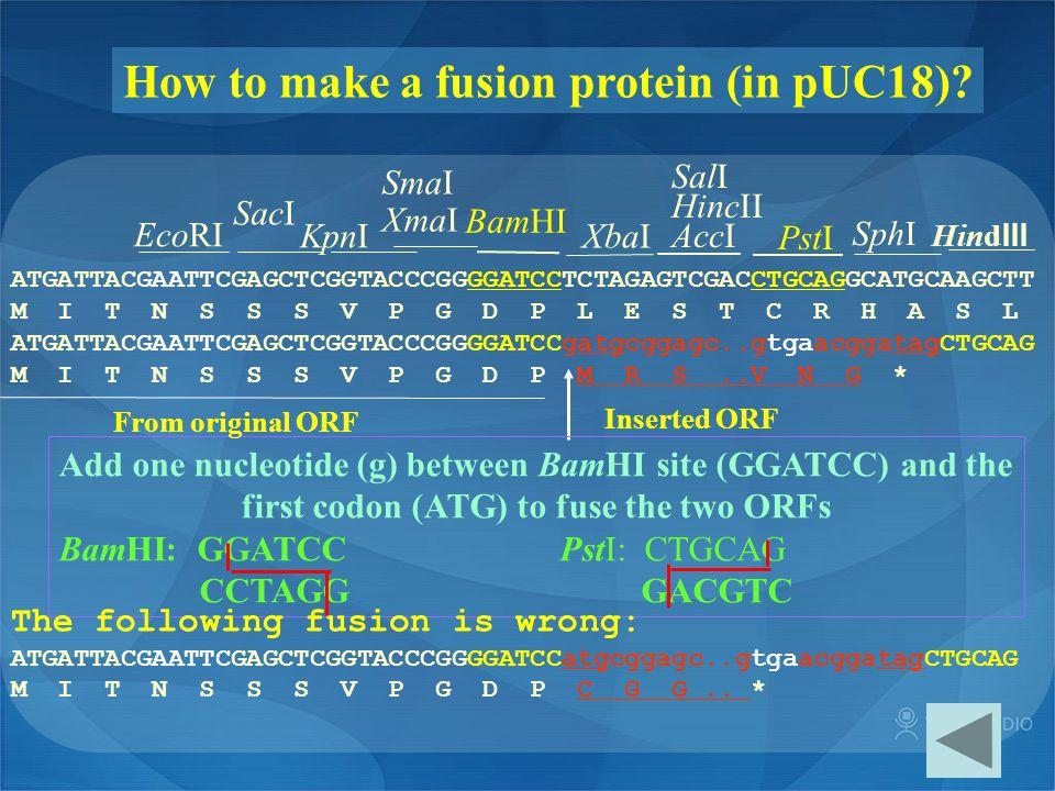 How to make a fusion protein (in pUC18)? ATGATTACGAATTCGAGCTCGGTACCCGGGGATCCTCTAGAGTCGACCTGCAGGCATGCAAGCTT M I T N S S S V P G D P L E S T C R H A S L