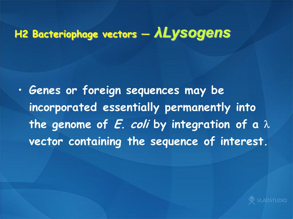 H2 Bacteriophage vectors — λLysogens Genes or foreign sequences may be incorporated essentially permanently into the genome of E. coli by integration