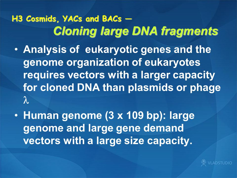 H3 Cosmids, YACs and BACs — Cloning large DNA fragments Analysis of eukaryotic genes and the genome organization of eukaryotes requires vectors with a