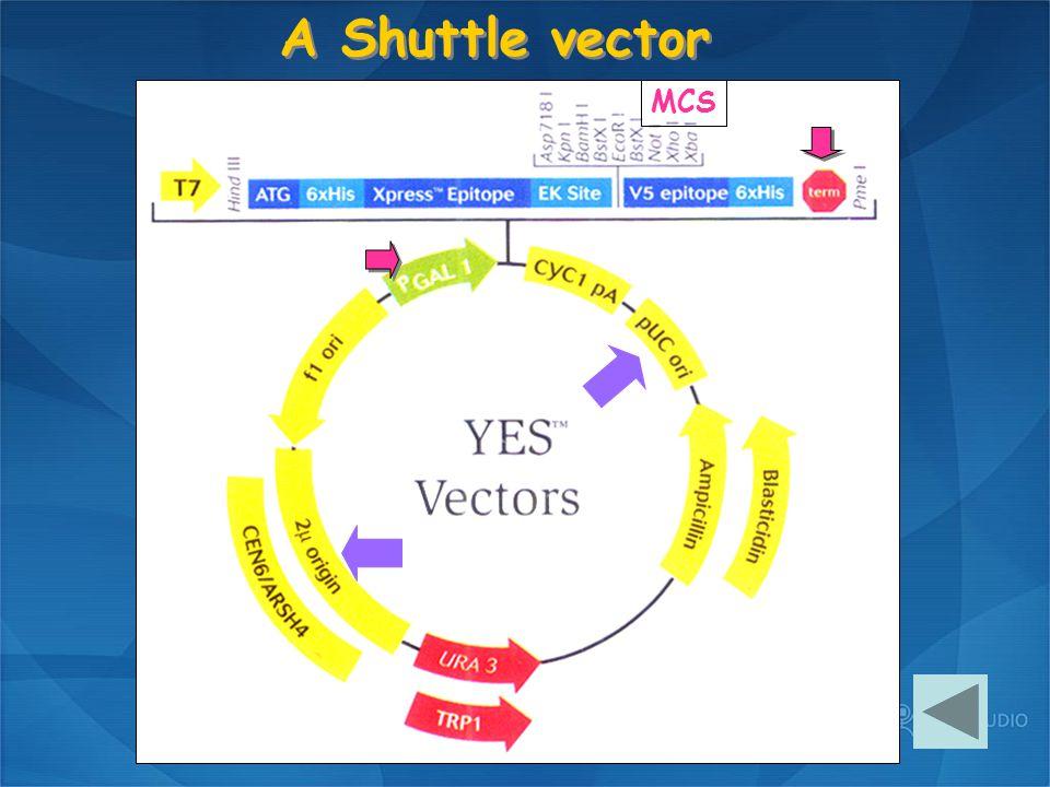 MCS A Shuttle vector