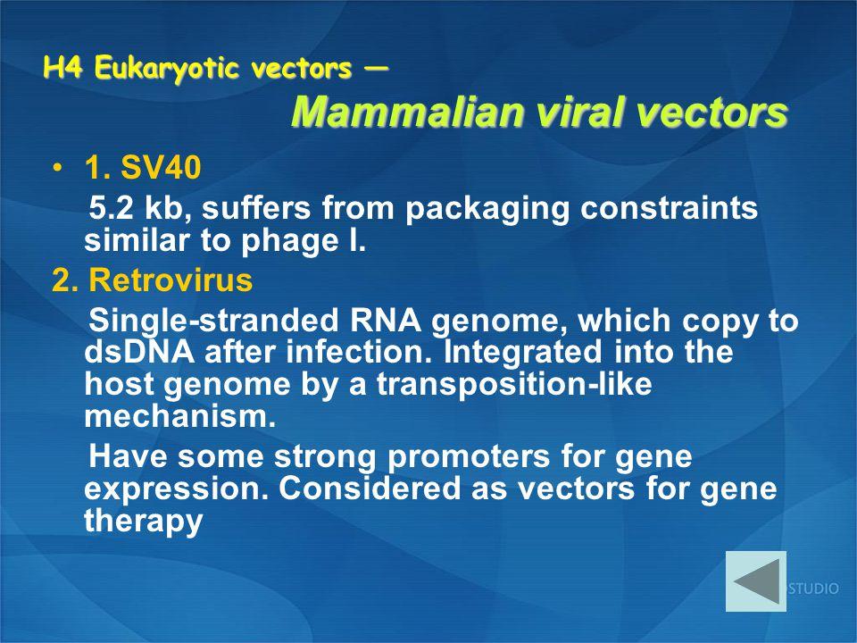 H4 Eukaryotic vectors — Mammalian viral vectors 1. SV40 5.2 kb, suffers from packaging constraints similar to phage l. 2. Retrovirus Single-stranded R