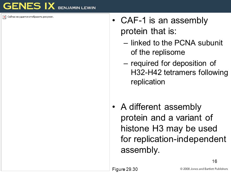 16 CAF-1 is an assembly protein that is: –linked to the PCNA subunit of the replisome –required for deposition of H32-H42 tetramers following replication A different assembly protein and a variant of histone H3 may be used for replication-independent assembly.