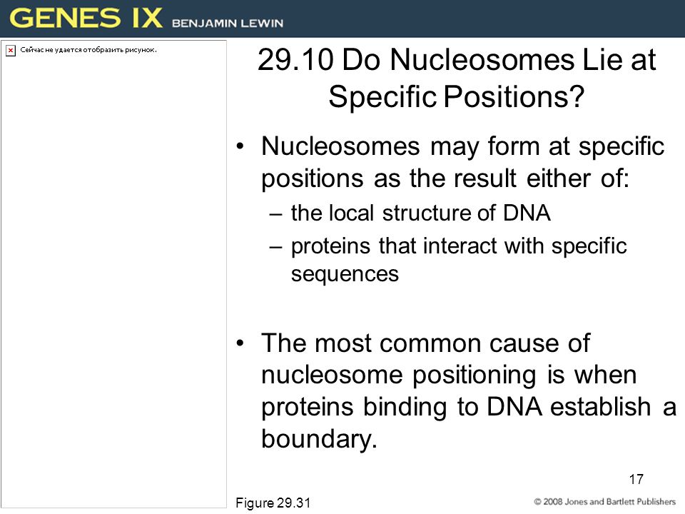 17 29.10 Do Nucleosomes Lie at Specific Positions.