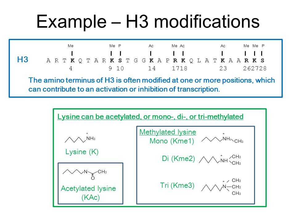 Example – H3 modifications H3 A R T K Q T A R K S T G G K A P R K Q L A T K A A R K S 4 9 10 14 1718 23 262728 MeMe PMe AcMe Me PAc The amino terminus of H3 is often modified at one or more positions, which can contribute to an activation or inhibition of transcription.