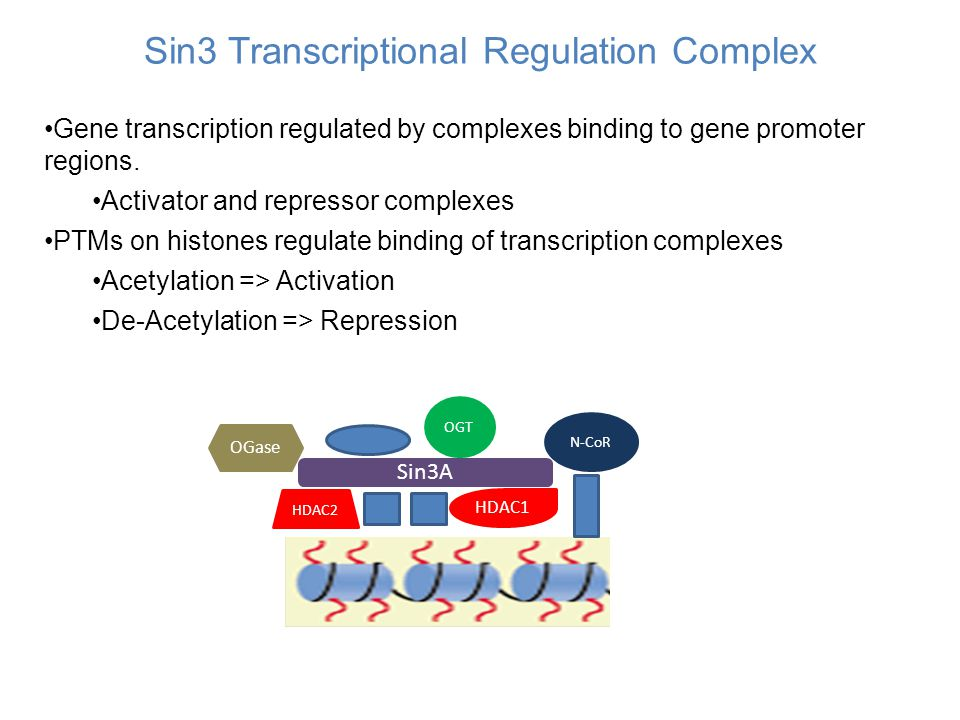 Sin3 Transcriptional Regulation Complex Gene transcription regulated by complexes binding to gene promoter regions. Activator and repressor complexes