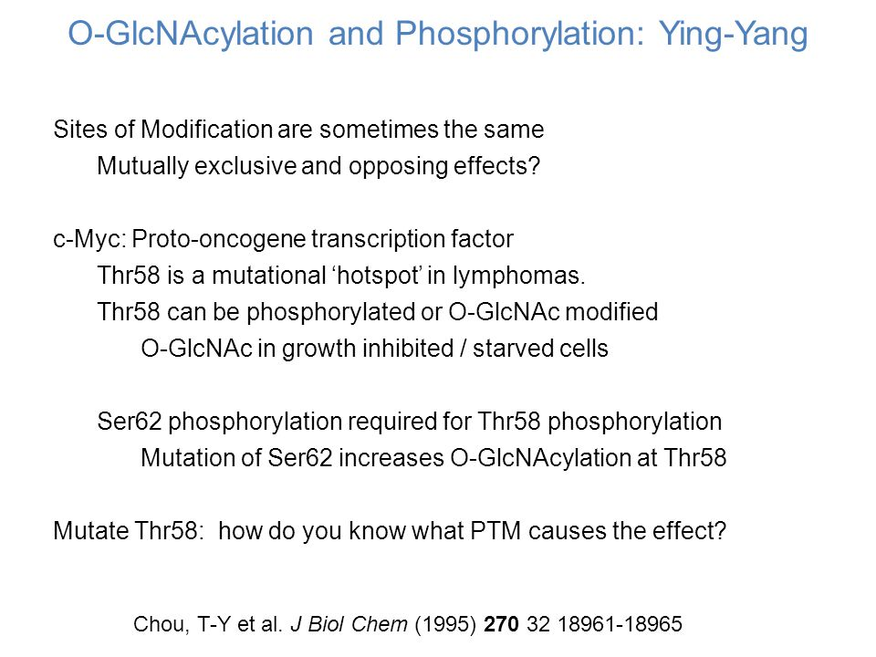 O-GlcNAcylation and Phosphorylation: Ying-Yang Sites of Modification are sometimes the same Mutually exclusive and opposing effects.