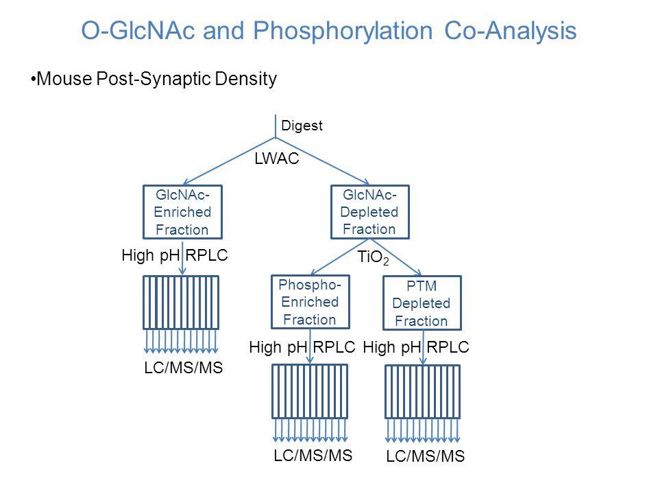 O-GlcNAc and Phosphorylation Co-Analysis Mouse Post-Synaptic Density GlcNAc- Enriched Fraction GlcNAc- Depleted Fraction Phospho- Enriched Fraction PT