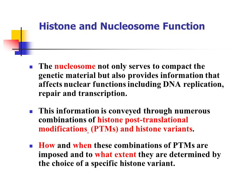 Histone and Nucleosome Function The nucleosome not only serves to compact the genetic material but also provides information that affects nuclear functions including DNA replication, repair and transcription.
