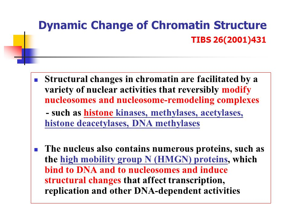 Dynamic Change of Chromatin Structure TIBS 26(2001)431 Structural changes in chromatin are facilitated by a variety of nuclear activities that reversibly modify nucleosomes and nucleosome-remodeling complexes - such as histone kinases, methylases, acetylases, histone deacetylases, DNA methylases The nucleus also contains numerous proteins, such as the high mobility group N (HMGN) proteins, which bind to DNA and to nucleosomes and induce structural changes that affect transcription, replication and other DNA-dependent activities