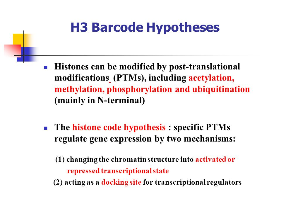H3 Barcode Hypotheses Histones can be modified by post-translational modifications (PTMs), including acetylation, methylation, phosphorylation and ubiquitination (mainly in N-terminal) The histone code hypothesis : specific PTMs regulate gene expression by two mechanisms: (1) changing the chromatin structure into activated or repressed transcriptional state (2) acting as a docking site for transcriptional regulators