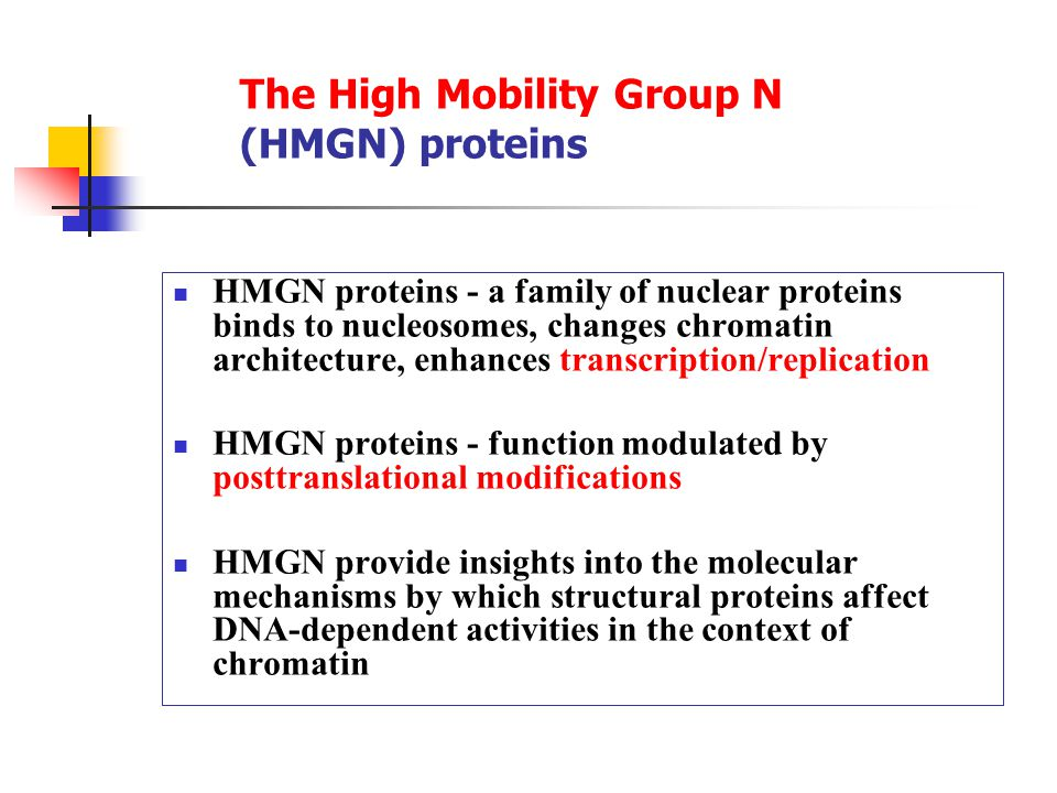 The High Mobility Group N (HMGN) proteins HMGN proteins - a family of nuclear proteins binds to nucleosomes, changes chromatin architecture, enhances transcription/replication HMGN proteins - function modulated by posttranslational modifications HMGN provide insights into the molecular mechanisms by which structural proteins affect DNA-dependent activities in the context of chromatin