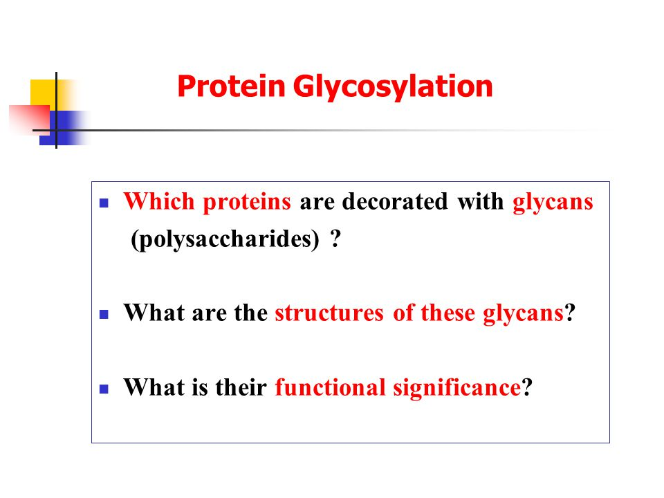 Protein Glycosylation Which proteins are decorated with glycans (polysaccharides) .