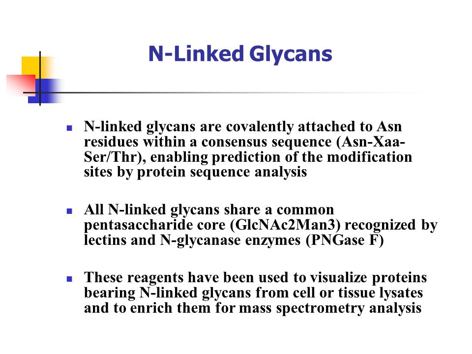 N-Linked Glycans N-linked glycans are covalently attached to Asn residues within a consensus sequence (Asn-Xaa- Ser/Thr), enabling prediction of the modification sites by protein sequence analysis All N-linked glycans share a common pentasaccharide core (GlcNAc2Man3) recognized by lectins and N-glycanase enzymes (PNGase F) These reagents have been used to visualize proteins bearing N-linked glycans from cell or tissue lysates and to enrich them for mass spectrometry analysis