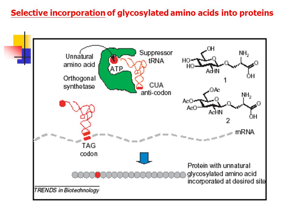 Selective incorporation of glycosylated amino acids into proteins