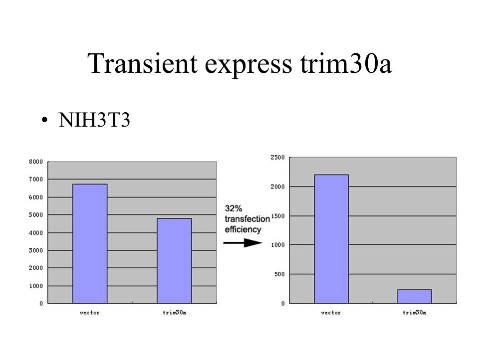 Transient express trim30a NIH3T3