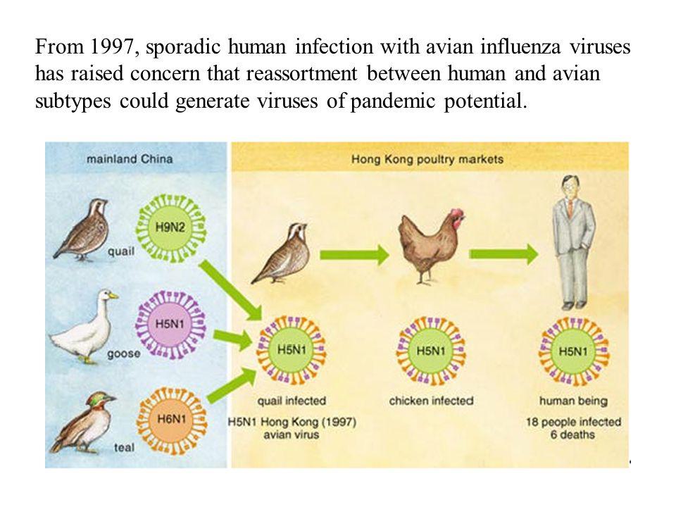 高致病禽流感病毒蛋白特性分析 RNA 多聚酶 病毒进入细胞 RNA 多聚酶 病毒释放 病毒 RNA 包装 离子通道,进入细胞 抑制宿主免疫反应 了解病毒蛋白与宿主细胞的相互作用,探讨可能的分子 机制,对发现新药有重要的指导意义。 Negative strand RNA virus