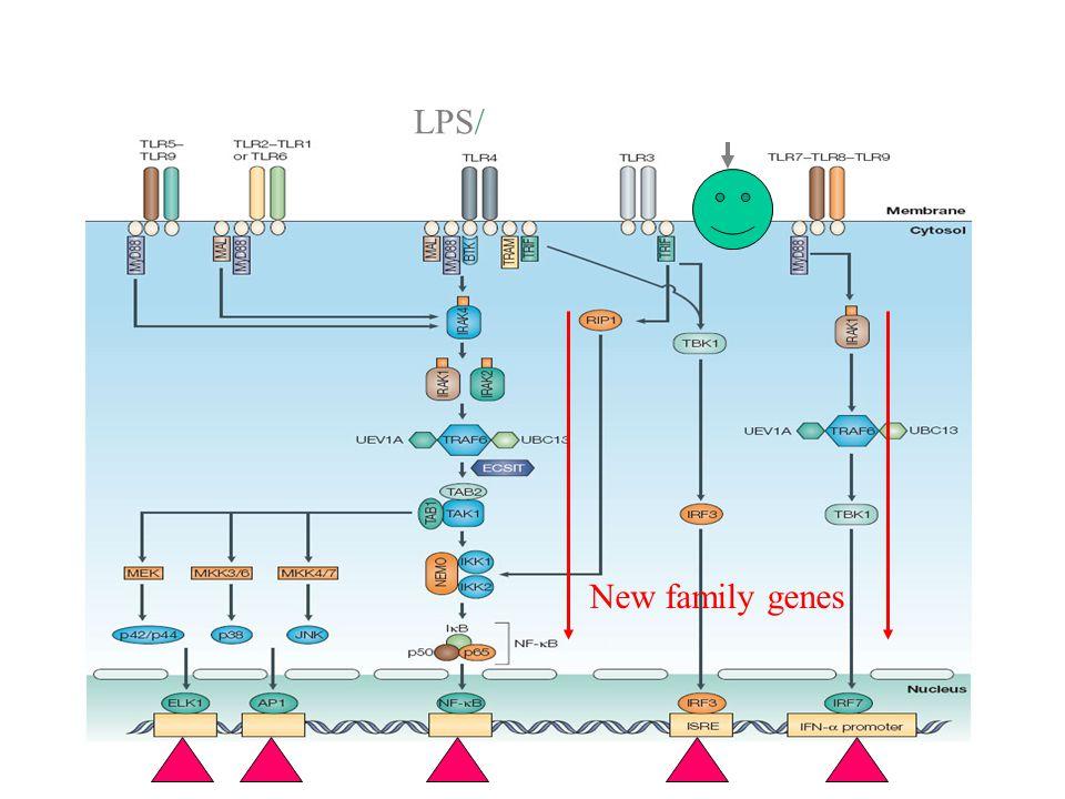 Th1/Th2 cells 对诱导免疫应答和疾病的发生有重要的作用 系统性自身免疫病  过敏性疾病,哮喘 器官特异性自身免疫病  器官排斥反应,抗感染 和一些抗肿瘤免疫反应 Th1/Th2 理论的发展 经历了三个阶段: 1 、验证 Th1/Th2 细胞 克隆的存在。 2 、验证 Th1/Th2 细胞 与疾病的关系。 3 、 Th1/Th2 细胞转录 因子和新分子的 研究。 这些对 Th1/Th2 细胞 分化机制研究有重要 的科学意义。