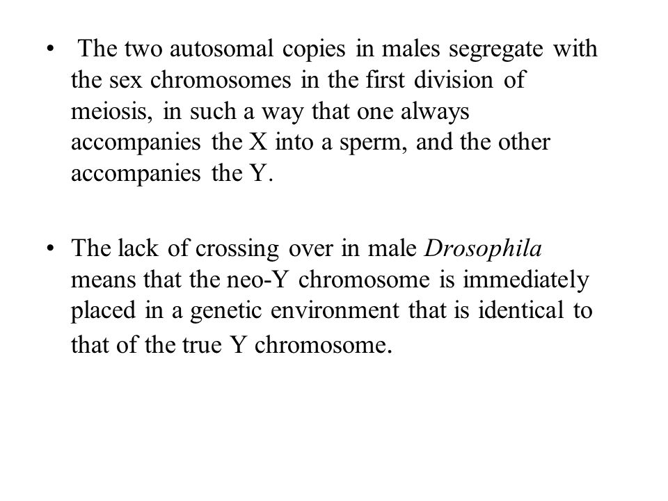 The two autosomal copies in males segregate with the sex chromosomes in the first division of meiosis, in such a way that one always accompanies the X