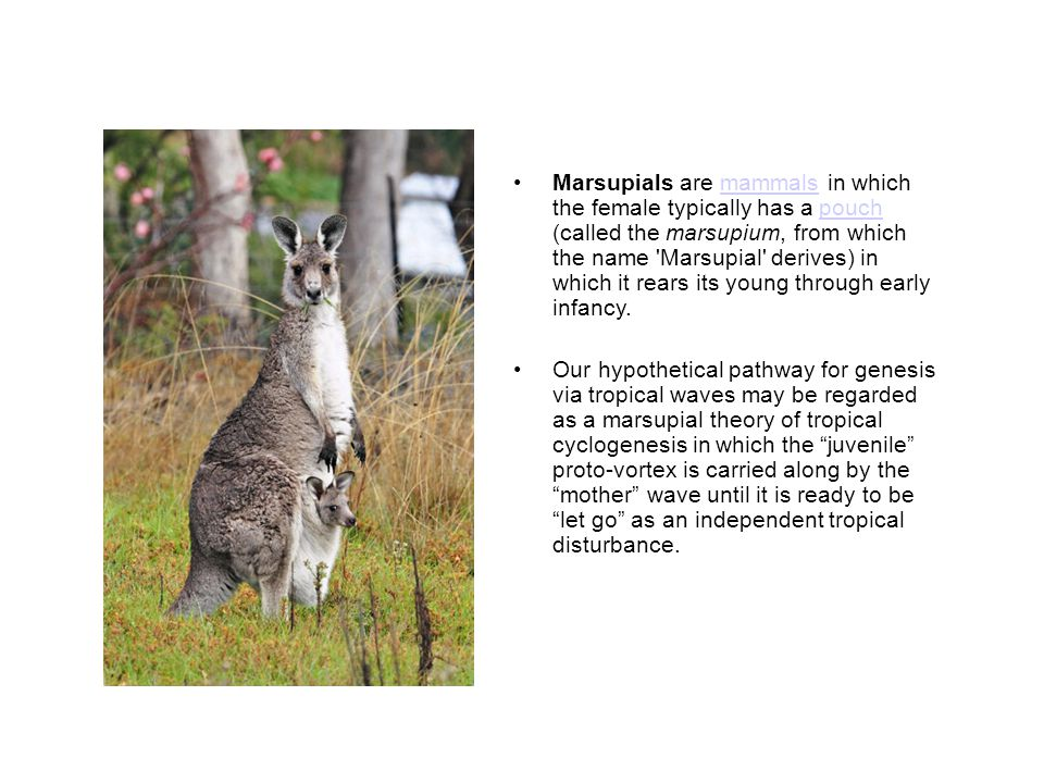 Marsupial slogans Ride the wave –A wave-centric point of view is preferred over the Earth frame for identification of Lagrangian boundaries.