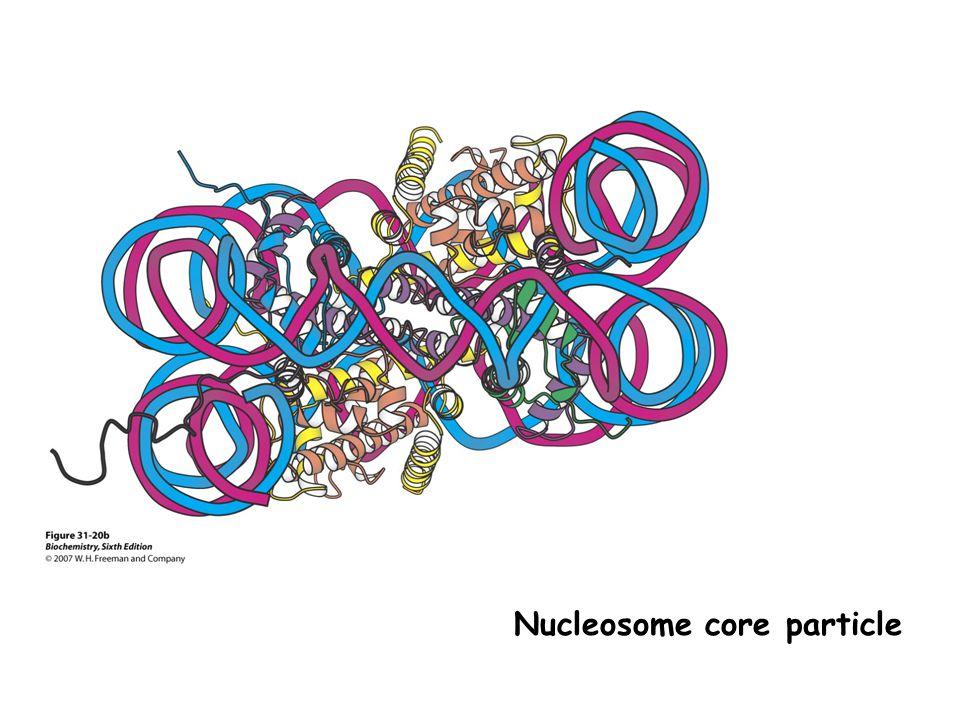 Histone acetyltransferase (HAT)