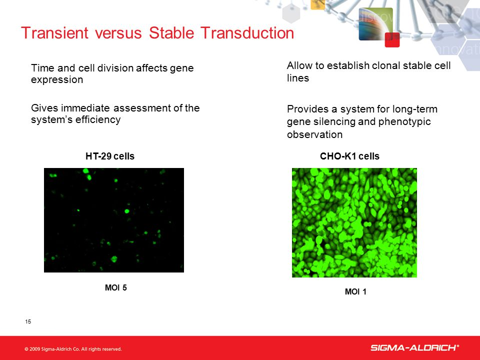 Transient versus Stable Transduction Time and cell division affects gene expression Gives immediate assessment of the system's efficiency MOI 5 HT-29