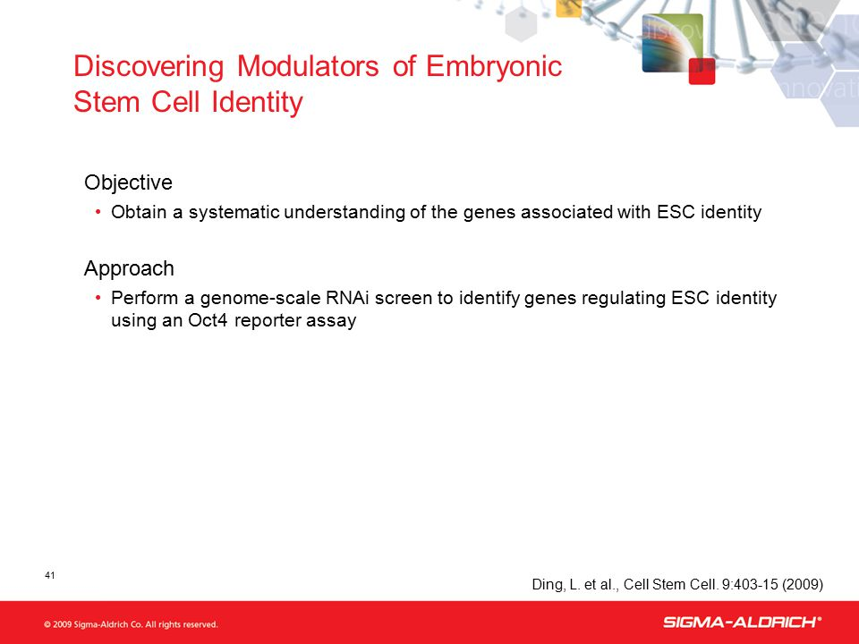 41 Discovering Modulators of Embryonic Stem Cell Identity Objective Obtain a systematic understanding of the genes associated with ESC identity Approach Perform a genome-scale RNAi screen to identify genes regulating ESC identity using an Oct4 reporter assay Ding, L.
