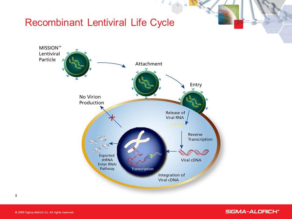 8 Recombinant Lentiviral Life Cycle