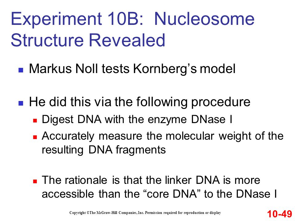 Markus Noll tests Kornberg's model He did this via the following procedure Digest DNA with the enzyme DNase I Accurately measure the molecular weight