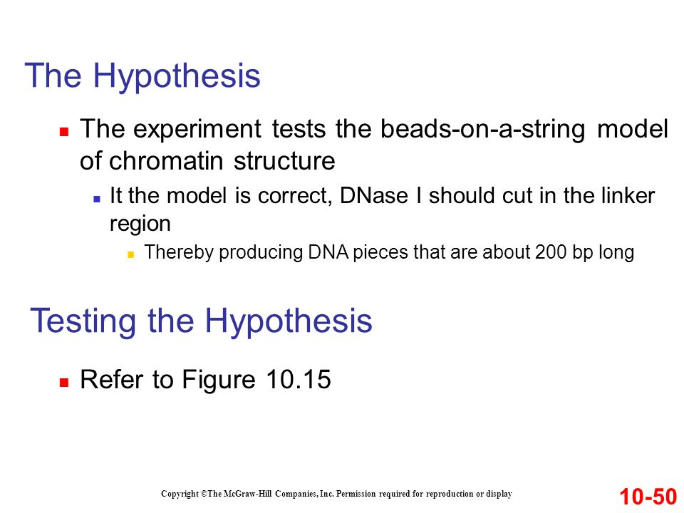 The Hypothesis The experiment tests the beads-on-a-string model of chromatin structure It the model is correct, DNase I should cut in the linker regio