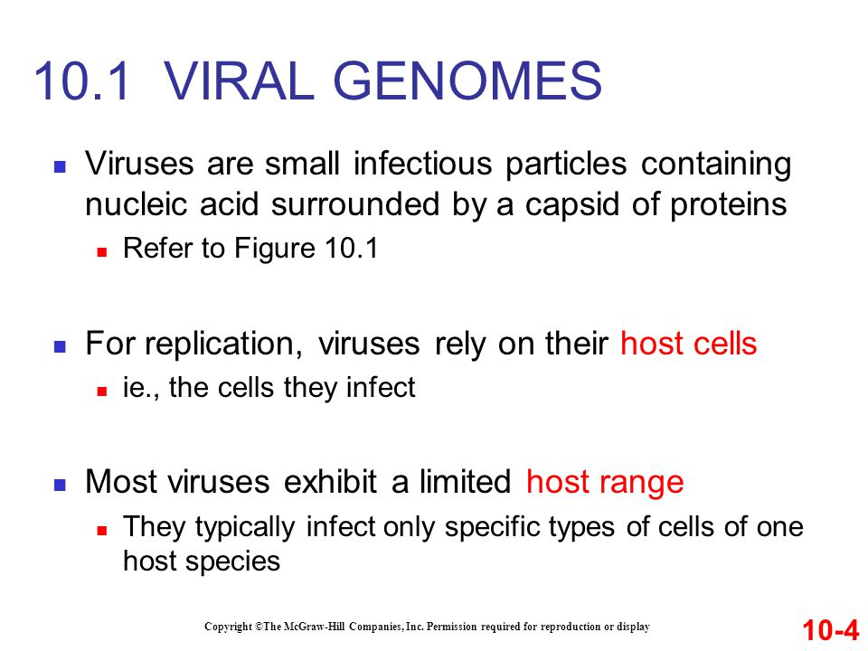 Viruses are small infectious particles containing nucleic acid surrounded by a capsid of proteins Refer to Figure 10.1 For replication, viruses rely o