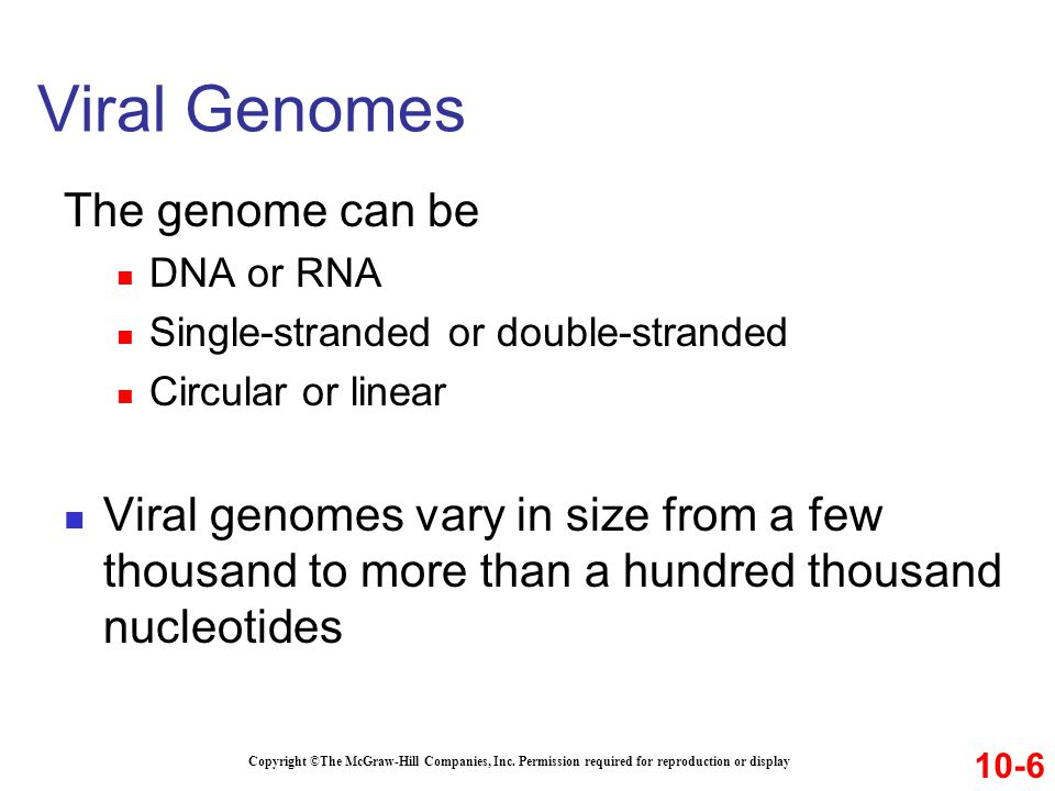 The genome can be DNA or RNA Single-stranded or double-stranded Circular or linear Viral genomes vary in size from a few thousand to more than a hundr