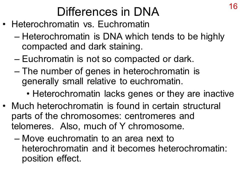 16 Differences in DNA Heterochromatin vs. Euchromatin –Heterochromatin is DNA which tends to be highly compacted and dark staining. –Euchromatin is no
