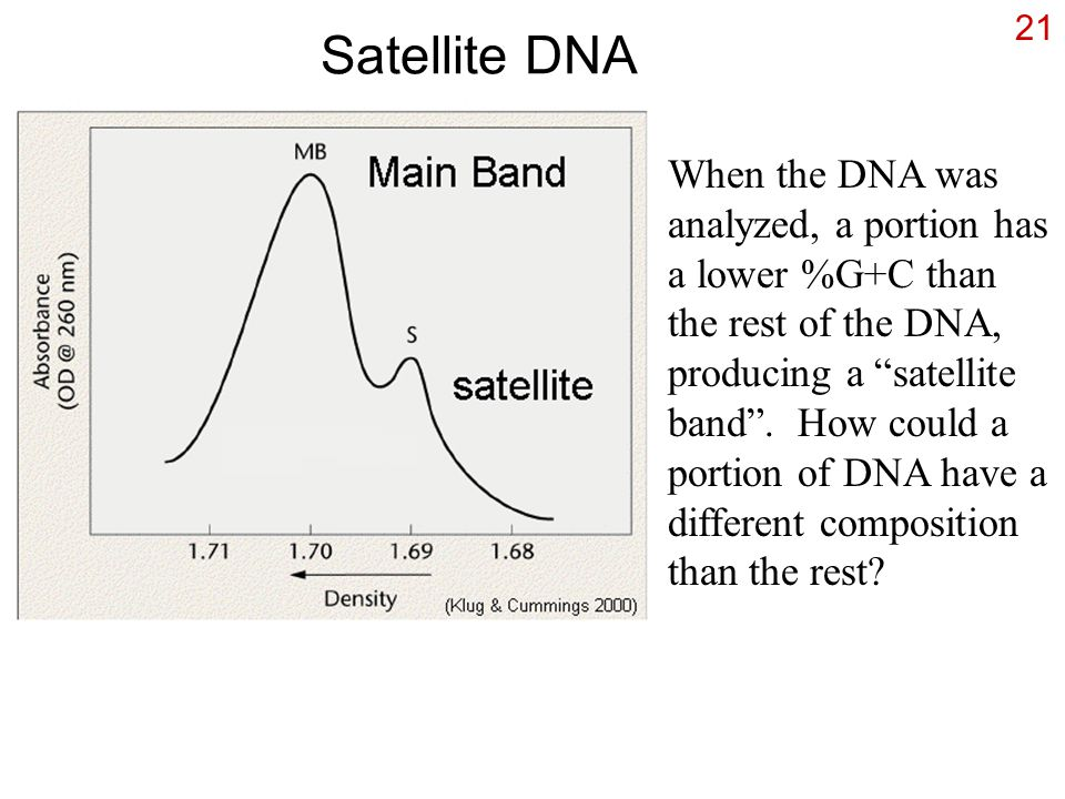 "21 Satellite DNA When the DNA was analyzed, a portion has a lower %G+C than the rest of the DNA, producing a ""satellite band"". How could a portion of"
