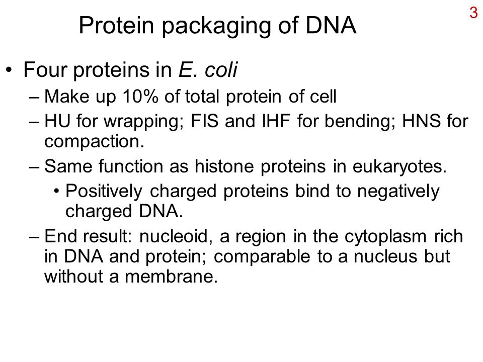 3 Protein packaging of DNA Four proteins in E. coli –Make up 10% of total protein of cell –HU for wrapping; FIS and IHF for bending; HNS for compactio