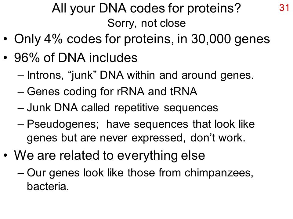 "31 All your DNA codes for proteins? Sorry, not close Only 4% codes for proteins, in 30,000 genes 96% of DNA includes –Introns, ""junk"" DNA within and a"