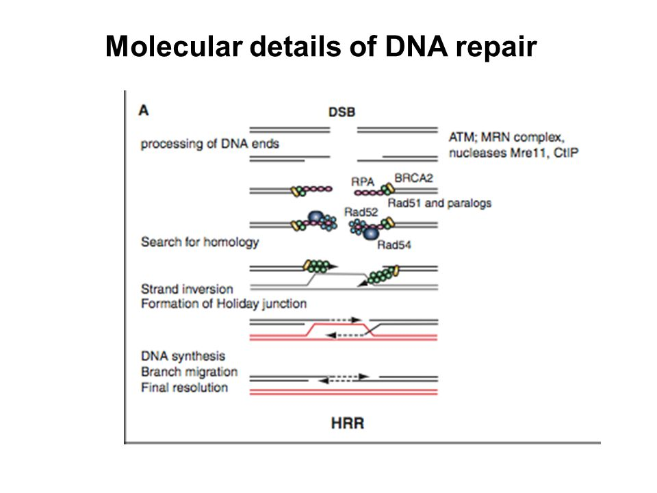 Molecular details of DNA repair