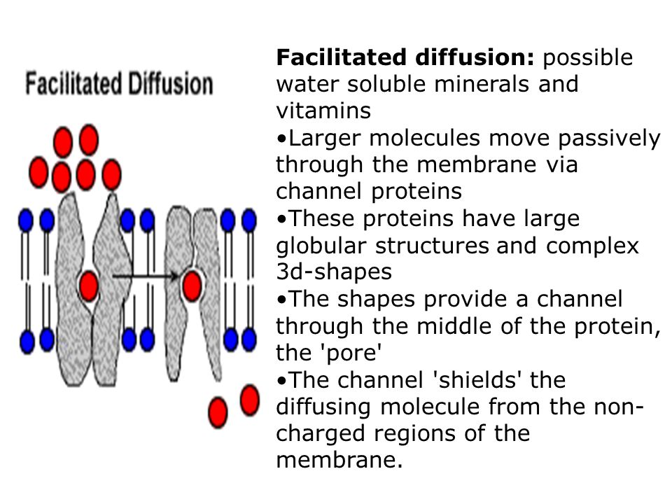 Facilitated diffusion: possible water soluble minerals and vitamins Larger molecules move passively through the membrane via channel proteins These pr