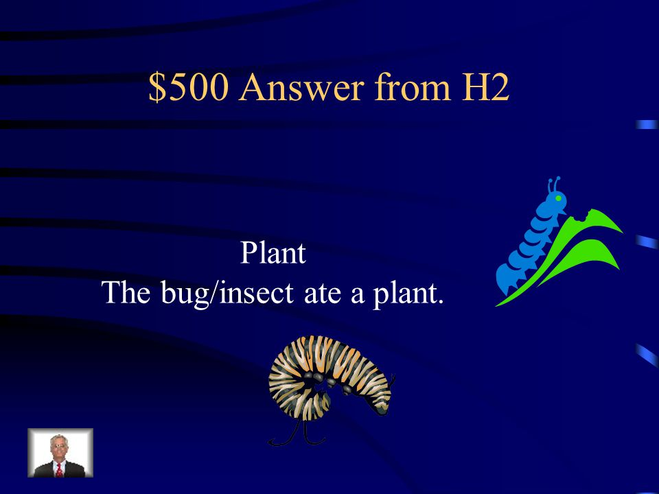 $500 Question from H2 An alligator eats a frog. The frog he ate had eaten a bug/insect.