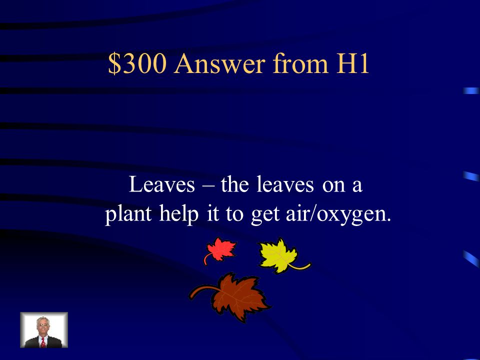 $300 Answer from H1 Leaves – the leaves on a plant help it to get air/oxygen.