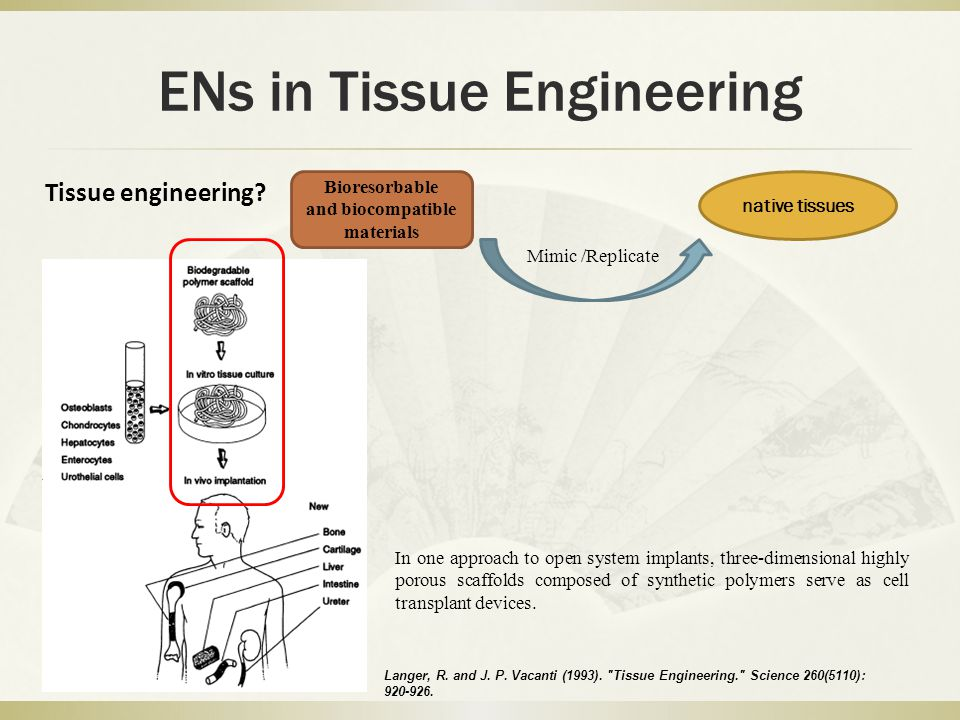 ENs in Tissue Engineering Tissue engineering? Bioresorbable and biocompatible materials native tissues Mimic /Replicate Langer, R. and J. P. Vacanti (