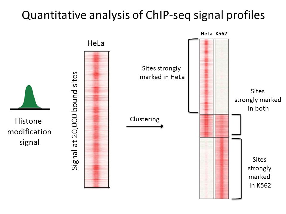 Quantitative analysis of ChIP-seq signal profiles Histone modification signal Signal at 20,000 bound sites HeLa K562 Sites strongly marked in HeLa Sites strongly marked in K562 Clustering Sites strongly marked in both