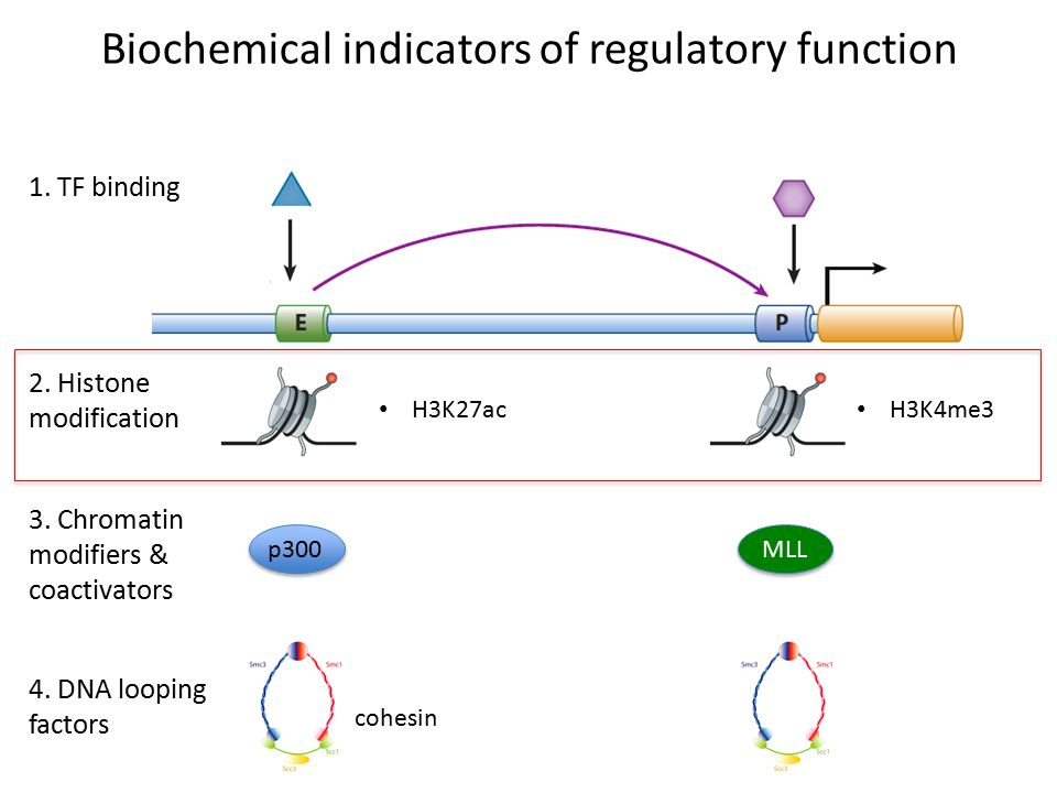 1. TF binding Biochemical indicators of regulatory function 2.