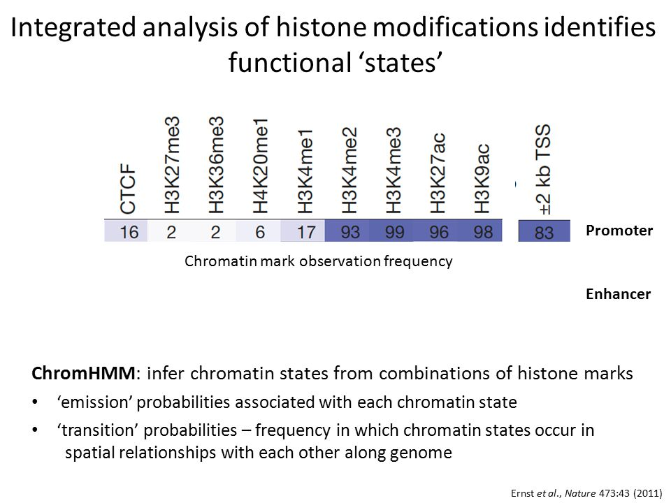 Integrated analysis of histone modifications identifies functional 'states' ChromHMM: infer chromatin states from combinations of histone marks 'emission' probabilities associated with each chromatin state 'transition' probabilities – frequency in which chromatin states occur in spatial relationships with each other along genome Ernst et al., Nature 473:43 (2011) Promoter Enhancer Chromatin mark observation frequency