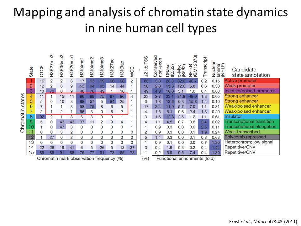 Mapping and analysis of chromatin state dynamics in nine human cell types Ernst et al., Nature 473:43 (2011)
