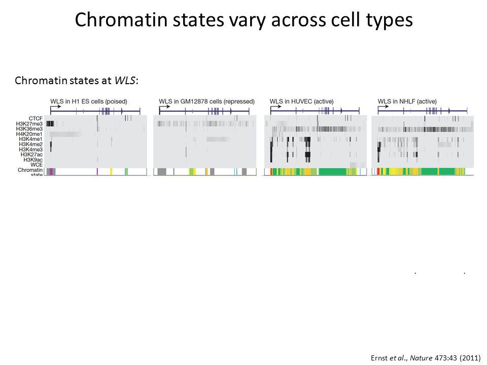 Chromatin states vary across cell types Ernst et al., Nature 473:43 (2011) Chromatin states at WLS: