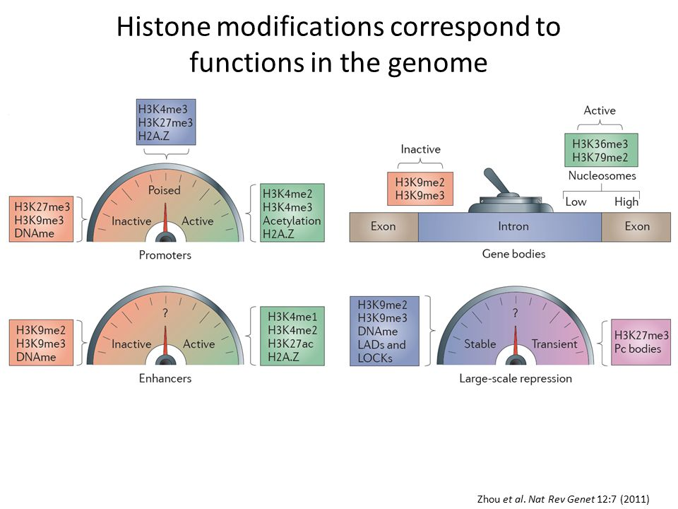 Summary Histone modifications reveal where functions are encoded in the genome Combinatorial analysis of histone modifications across biological states identifies tissue-specific chromatin states Tissue-specific chromatin states reveal tissue-specific enhancers, promoters, etc.