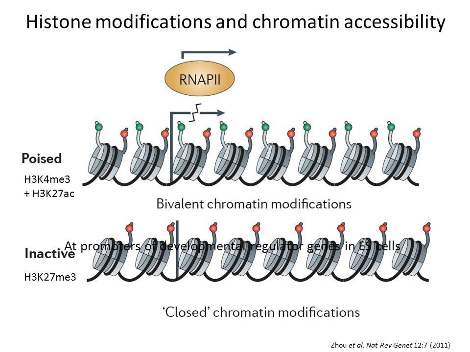 Histone modifications and chromatin accessibility H3K27me3 Zhou et al.