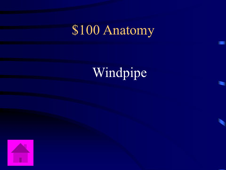 Jeopardy Content by: Terry Linkemer Anatomy PhysiologyDiseasesLungs Risk Factors Q $100 Q $200 Q $300 Q $400 Q $500 Q $100 Q $200 Q $300 Q $400 Q $500 Final Jeopardy