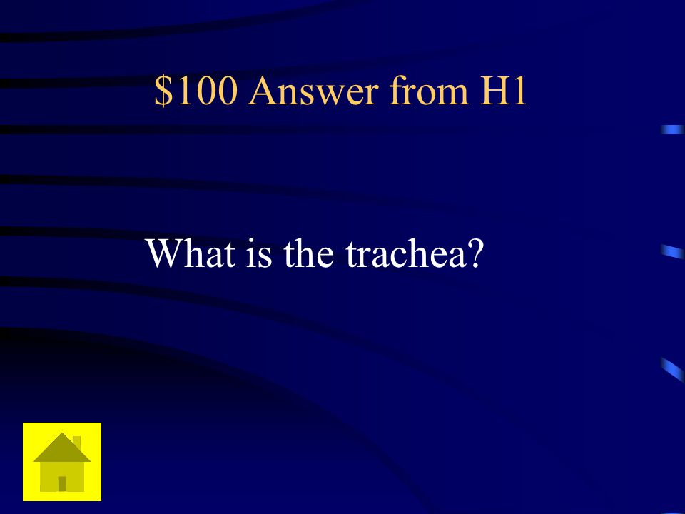 $100 Answer from H1 What is the trachea?